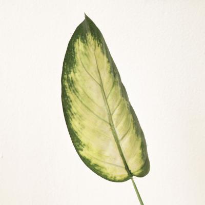투톤 그린 잎