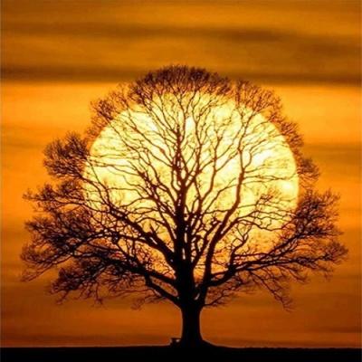 [피포페인팅]GX5942 Sunset tree size 40*50cm