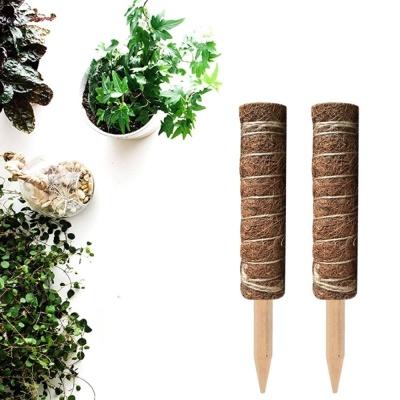 코코넛 야자 스틱 (식물 지주대) 30cm