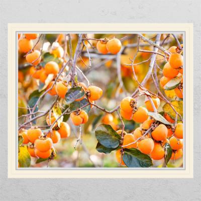tl074-풍요로운재물의감나무2_창문그림액자