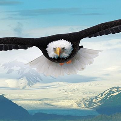 750조각 직소퍼즐▶ 독수리의 비상 (EU6005-0302)