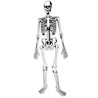 [러닝리소스] 인체뼈모형퍼즐 (LER3332)