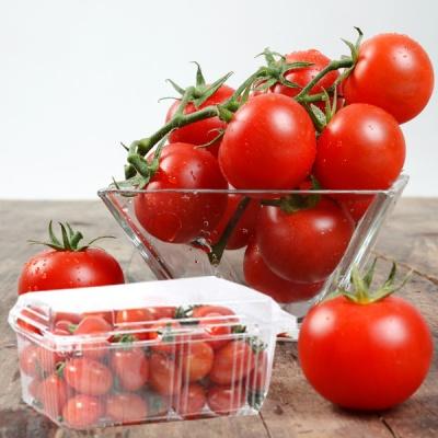 상큼,새콤 탱탱한 방울 토마토 1kg(90~100알)