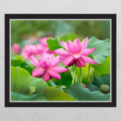 cl424-풍수부귀로운연꽃2_창문그림액자
