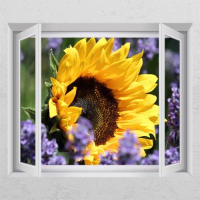 cr603-따스한햇빛받는해바라기_창문그림액자