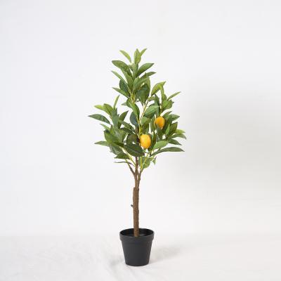 리얼 레몬 나무 70cm