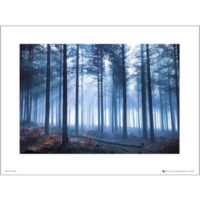 PDH01103 Tom Mackie - Porest (40x50)