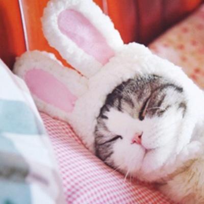 [봉봉펫닷컴] 강아지 고양이 애견 악세사리 모음