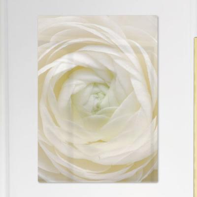 pi182-폼아크릴액자56CmX78Cm_순백의모란꽃