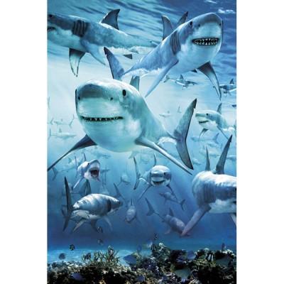 PH0426 들끓는 상어떼