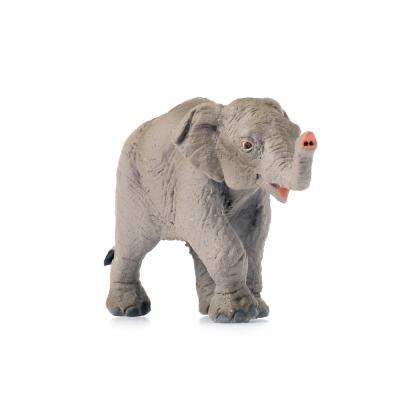 222329 아기아시아코끼리 Asian Elephant Baby