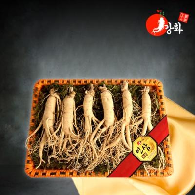 [강화초지인삼] 명품 수삼 1채 750g (5-7뿌리)