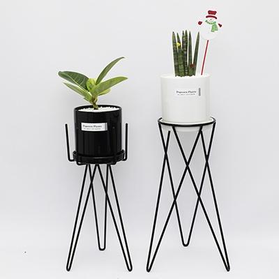 화분스탠드+고무나무세트