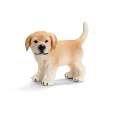 서있는 골든리트리버 강아지