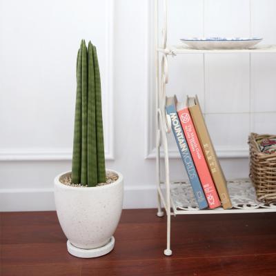 테라조 화분 스투키 중형 공기정화식물