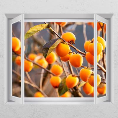 ts427-금전운높여주는감나무_창문그림액자