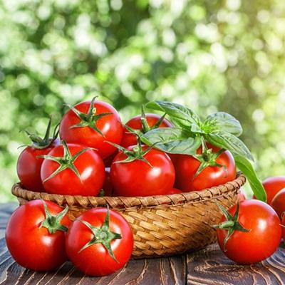 방울 토마토 도마토 키우기 채소 씨앗 종자 50립