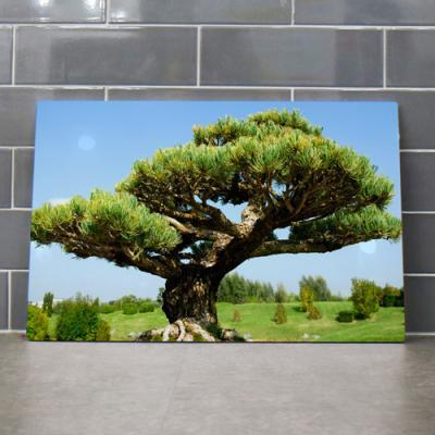 af139-58CmX38Cm_부와명예의상징풍수소나무