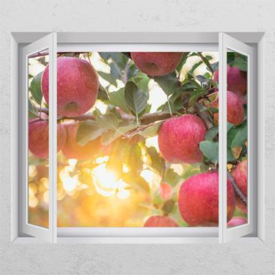 ij883-사과나무_창문그림액자