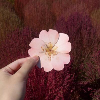 들장미카드(2color)