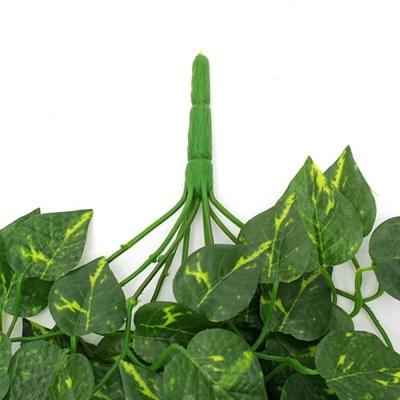 담쟁이 넝쿨 90cm 덩쿨식물 화초 담쟁이넝쿨 나무