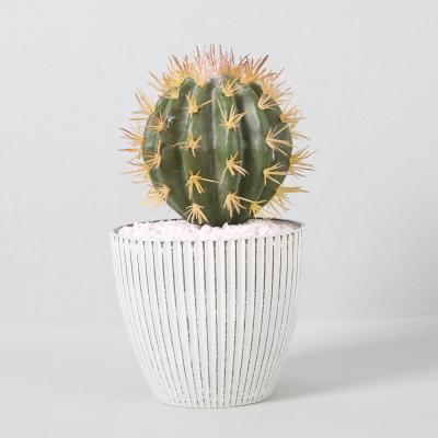 다육식물 다육이 미니화분 금호선인장 28cm(L)