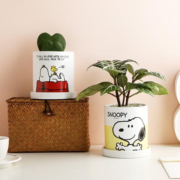 피너츠 스누피 공기정화식물 4종 택1