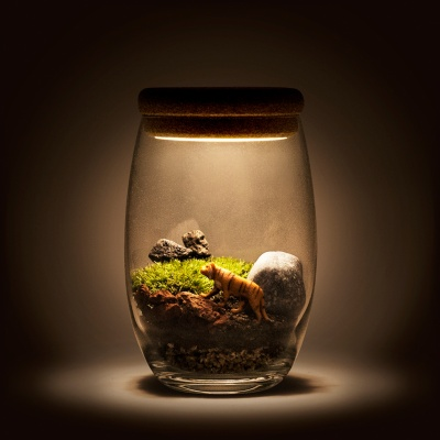 [빛가든] 해질녘 초원