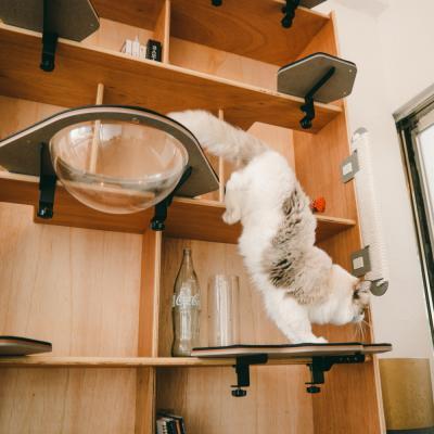 캣킥 고양이 계단 투명해먹 캣 타워 스텝 선반 놀이터