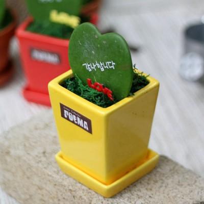 마음이포트-사랑감사2종세트