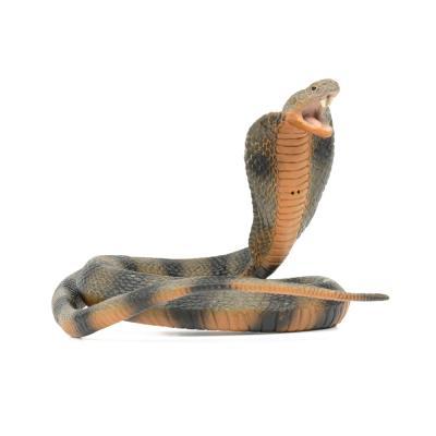 260329 코브라 Cobra