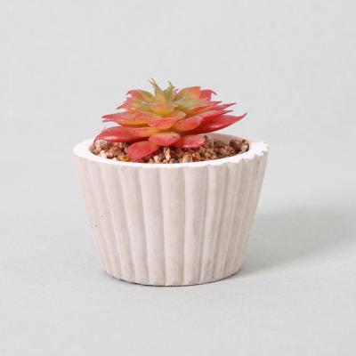 다육식물 다육이 미니화분 월금다육 7cm