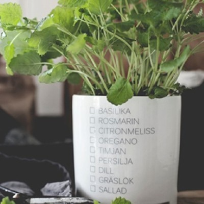 Pot For Herbs