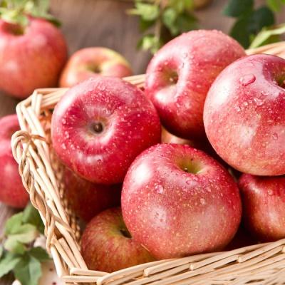 가을햇살 담은 아삭달콤 햇사과 3.5kg/16과내외