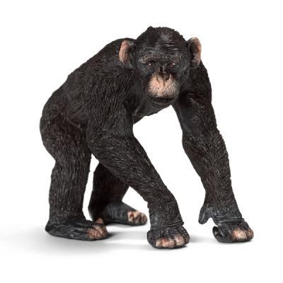 수컷 침팬지