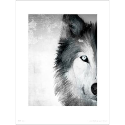 PDH01399 늑대 페인트 (40x50cm)