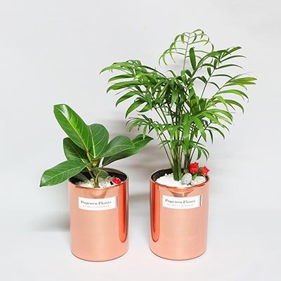 육각 화분스탠드(L)+St.화분(공기정화식물) 세트