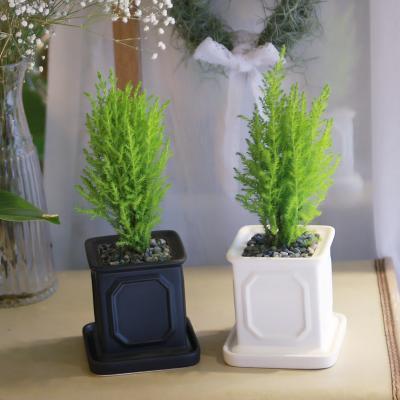 몰딩 화분 율마 공기정화식물