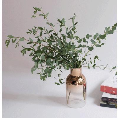유칼립투스 파블로 인테리어 공기정화식물