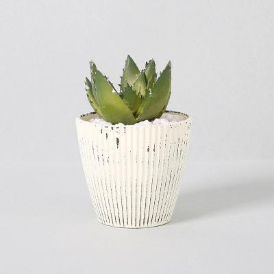 다육식물 다육이 미니화분 미니알로에 11cm