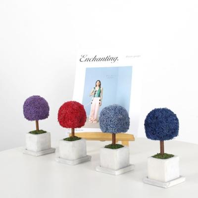 스칸디아모스 15색상 미니 나무 화분