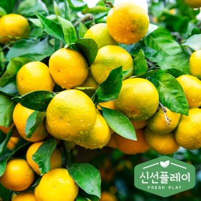 신선플레이 제주 타이벡 감귤 5kg (특대과) 햇밀감
