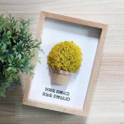 레인디어모스 6색 나무액자/예쁜천연이끼/습도조절