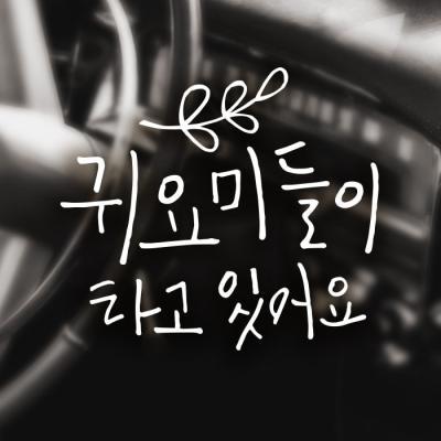18A60 캘리벨로아A009귀요미월계수 반사