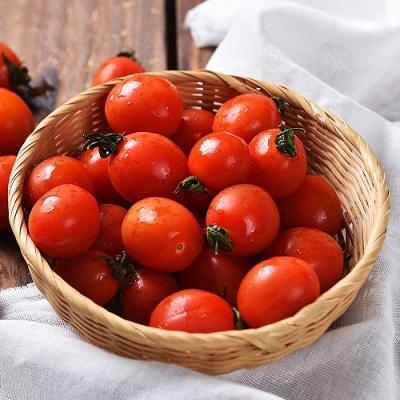 신선플레이 당일수확 방울 토마토 5kg 가정용 3번