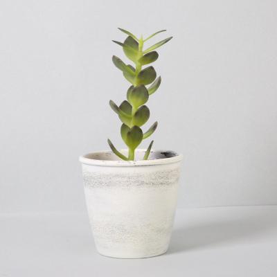 다육식물 다육이 미니화분 머니잎가지 26cm
