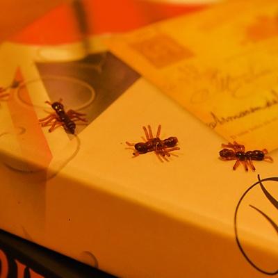 개미 모형 (9EA/1SET)
