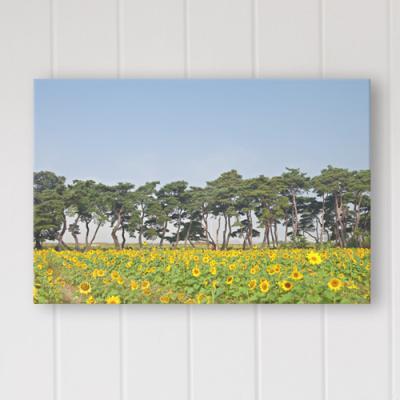 cq267-풍수에좋은소나무와해바라기_중형노프레임