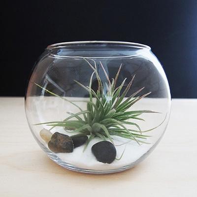 My Greenery 틸란드시아 테라리움 DIY(라지)