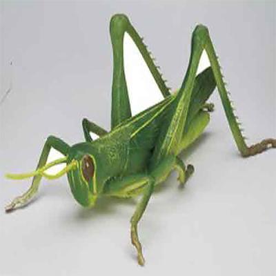거대 메뚜기